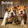 Bulldog-Puppies-Mini-Wall-Calendar-image-7