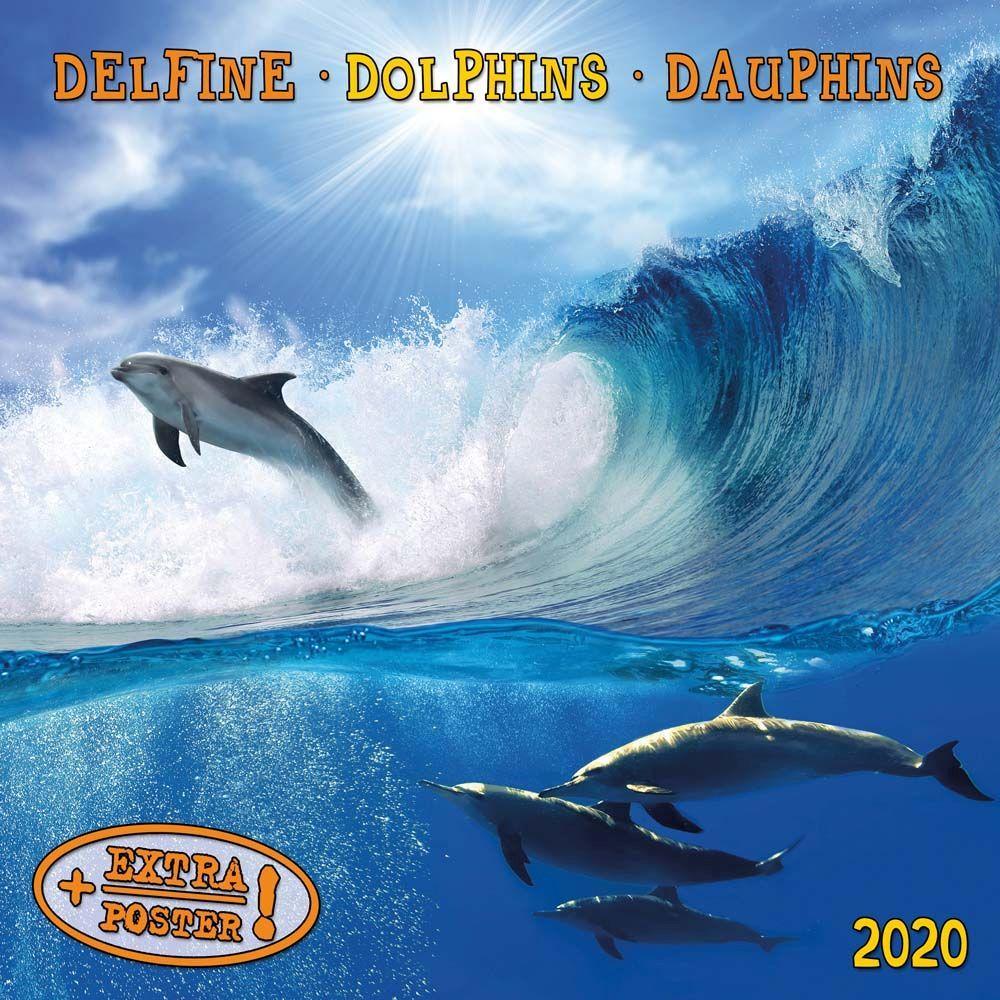 Dolphins Tushita Sm 2021 Wall Calendar