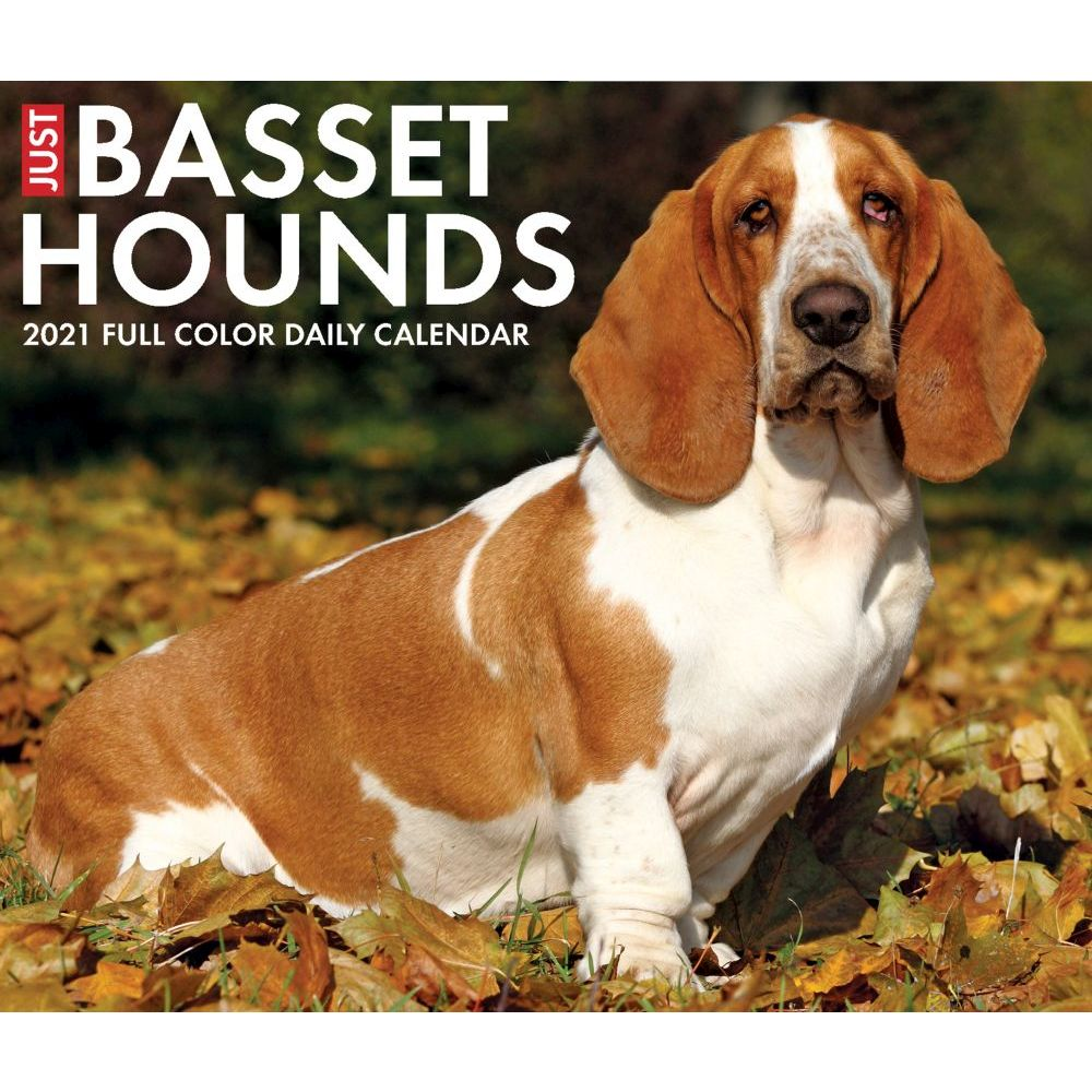 Just Basset Hounds 2021 Desk Calendar
