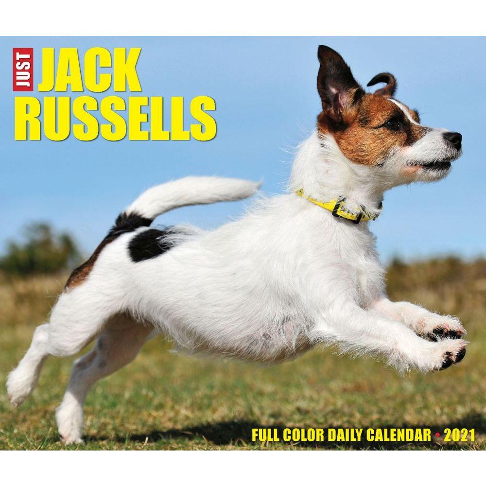 Jack Russells 2021 Desk Calendar