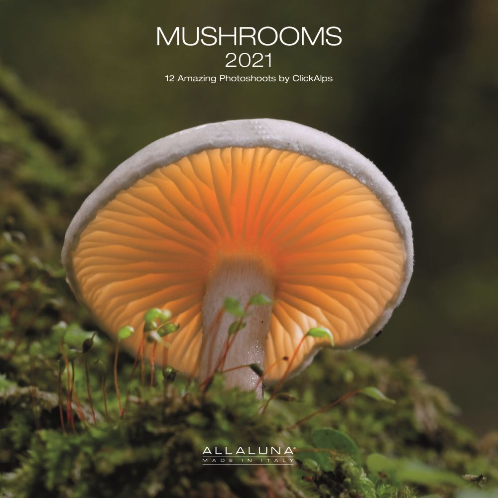 2021 Mushroom Alla Luna Wall Calendar