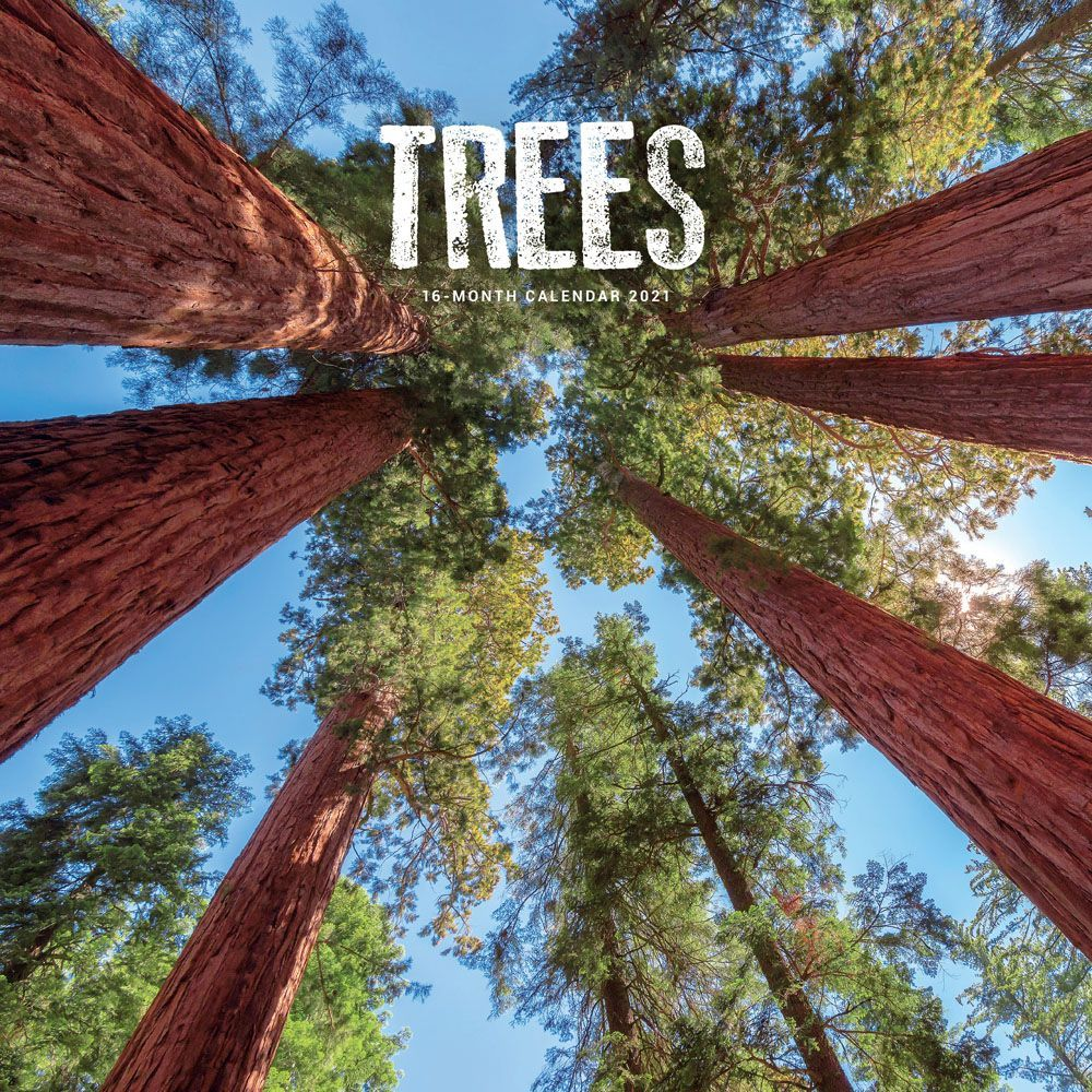 2021 Trees Wall Calendar