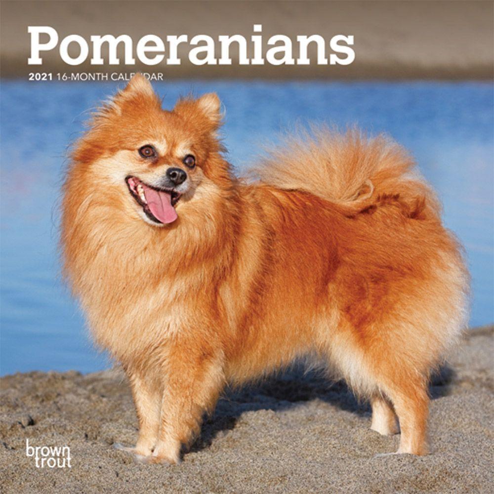 Pomeranian 2021 Mini Calendar
