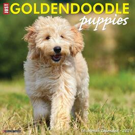 Just Goldendoodle Puppies Wall Calendar