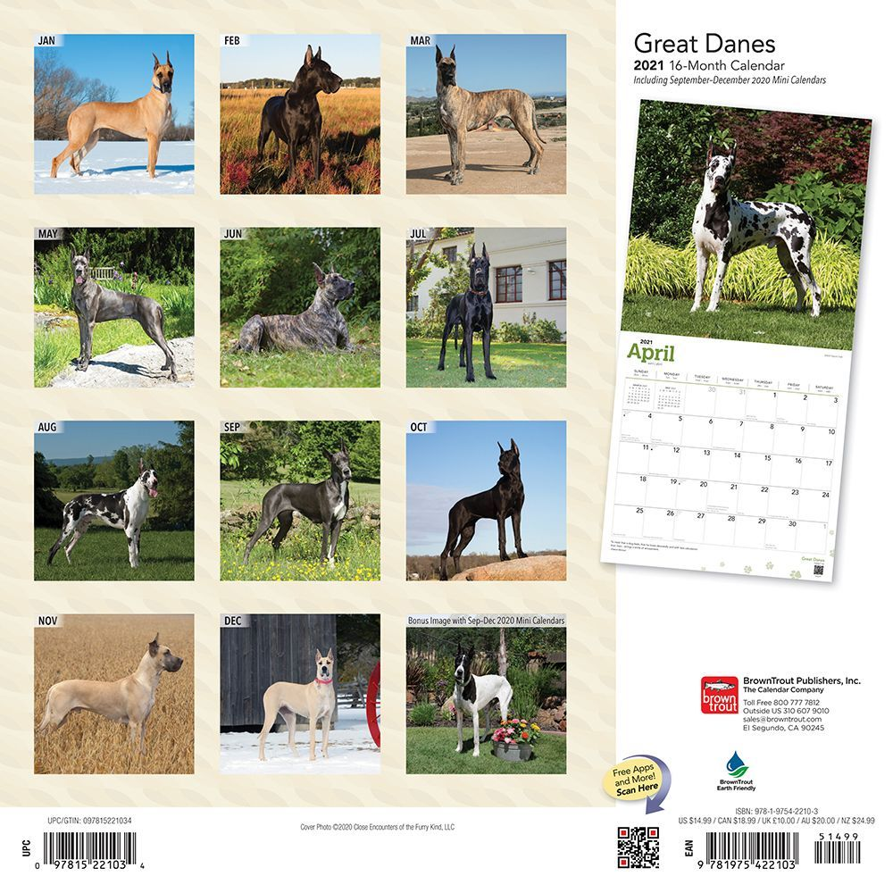 great-danes-wall-calendar-image-2