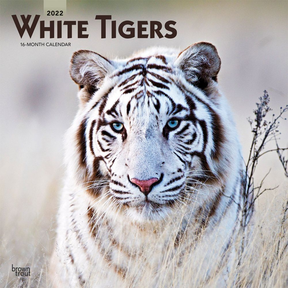 Tigers White 2022 Wall Calendar