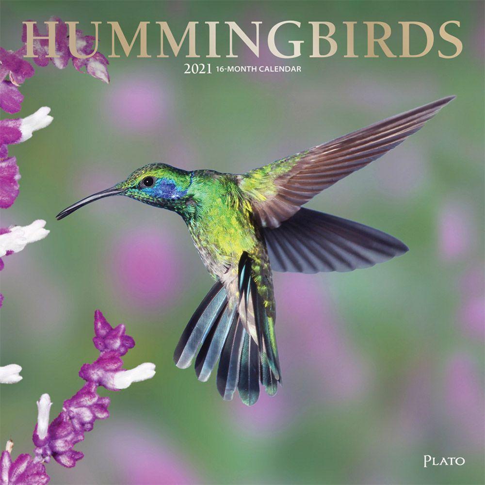 Hummingbirds Plato 2021 Wall Calendar