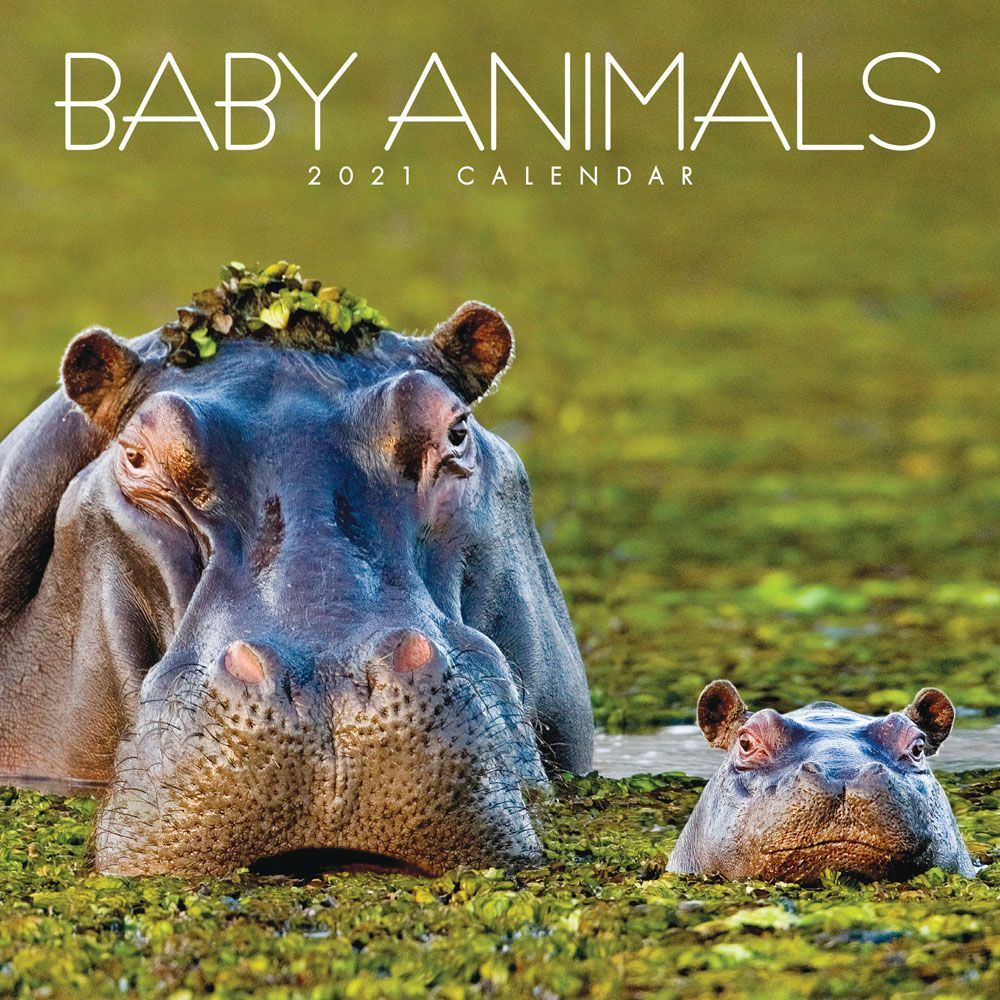 2021 Baby Animals Mini Wall Calendar