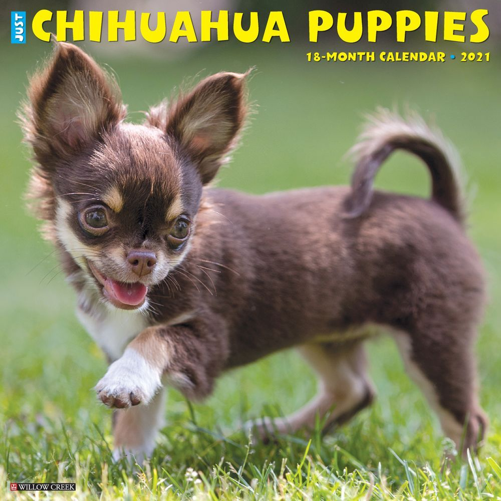Chihuahua Puppies 2021 Wall Calendar