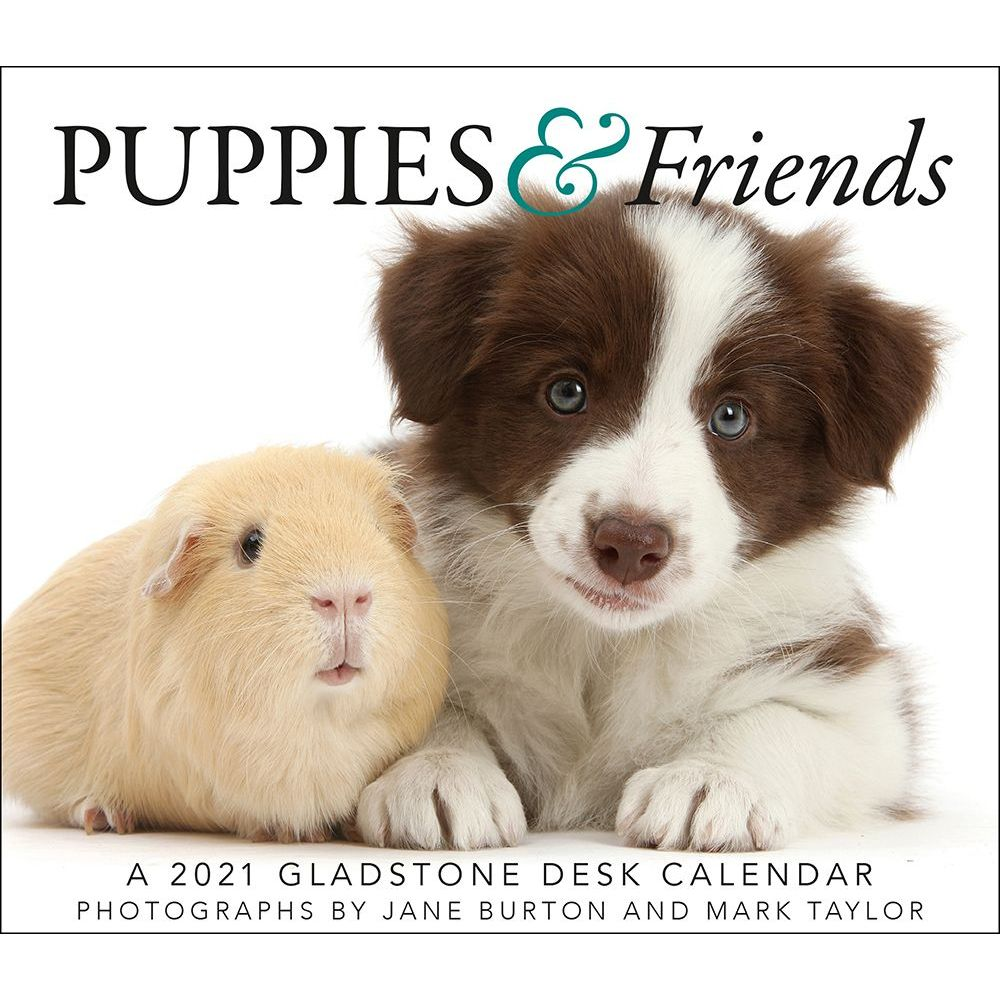 Calendar | Friend | Puppy | Desk | 2020