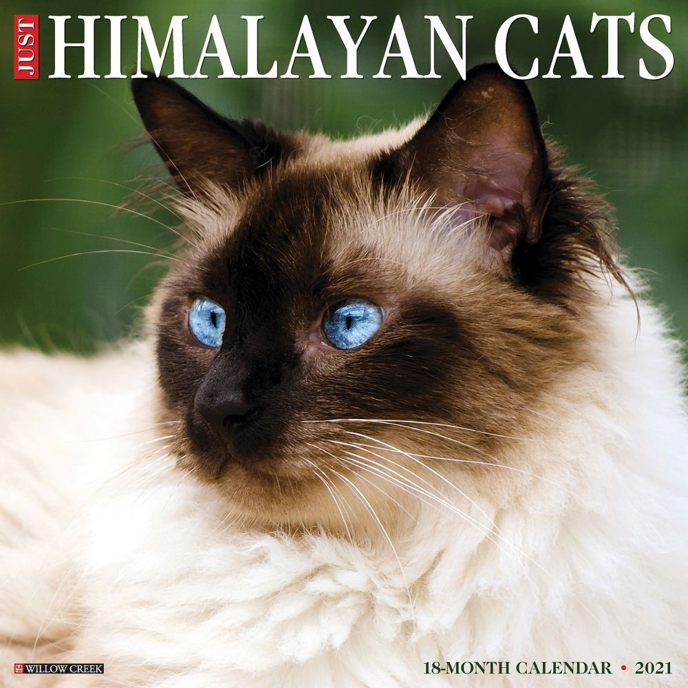 Himalayan Cats 2021 Wall Calendar