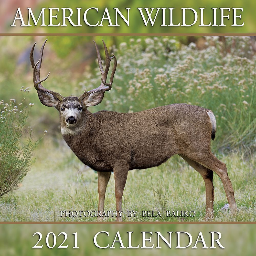 2021 American Wildlife Wall Calendar