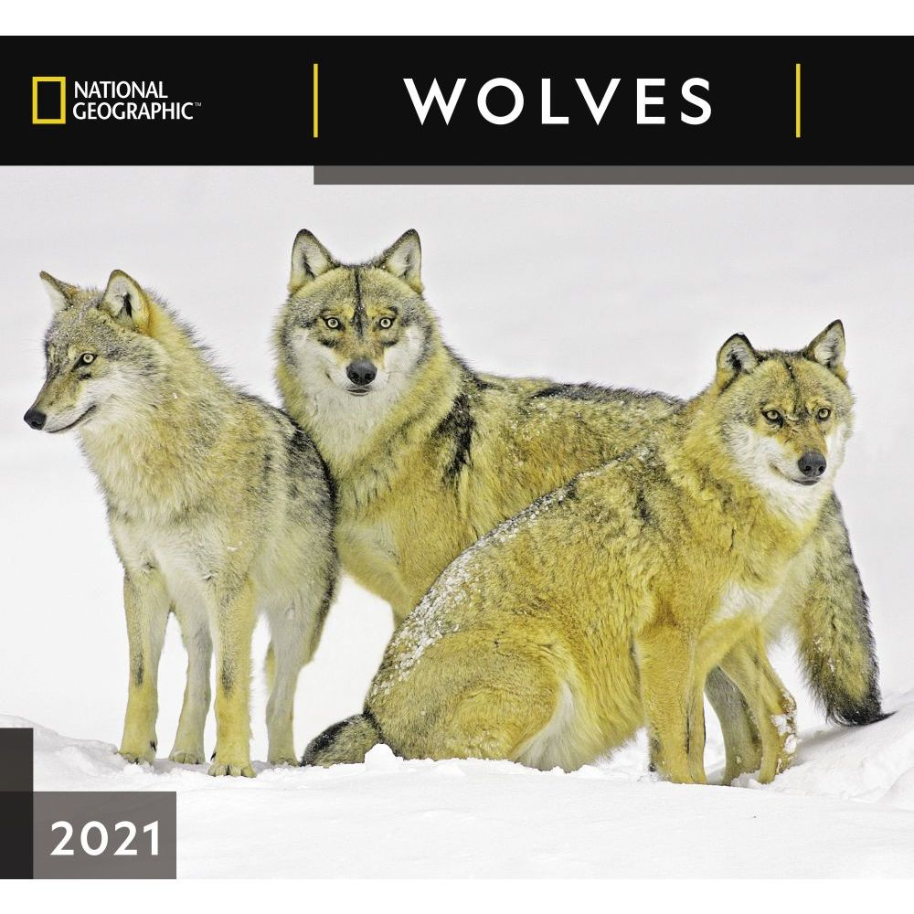 2021 Wolves National Geographic Wall Calendar