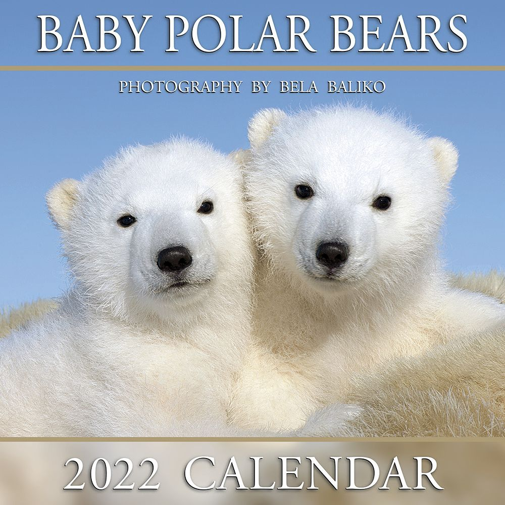 Baby Polar Bears 2022 Mini Wall Calendar