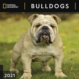 Bulldogs National Geographic Wall Calendar