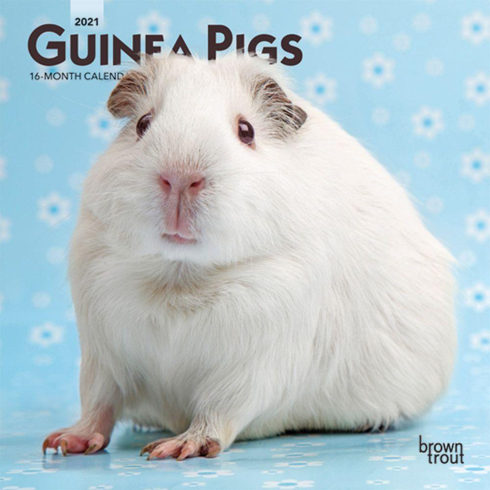 Guinea Pigs 2021 Mini Calendar