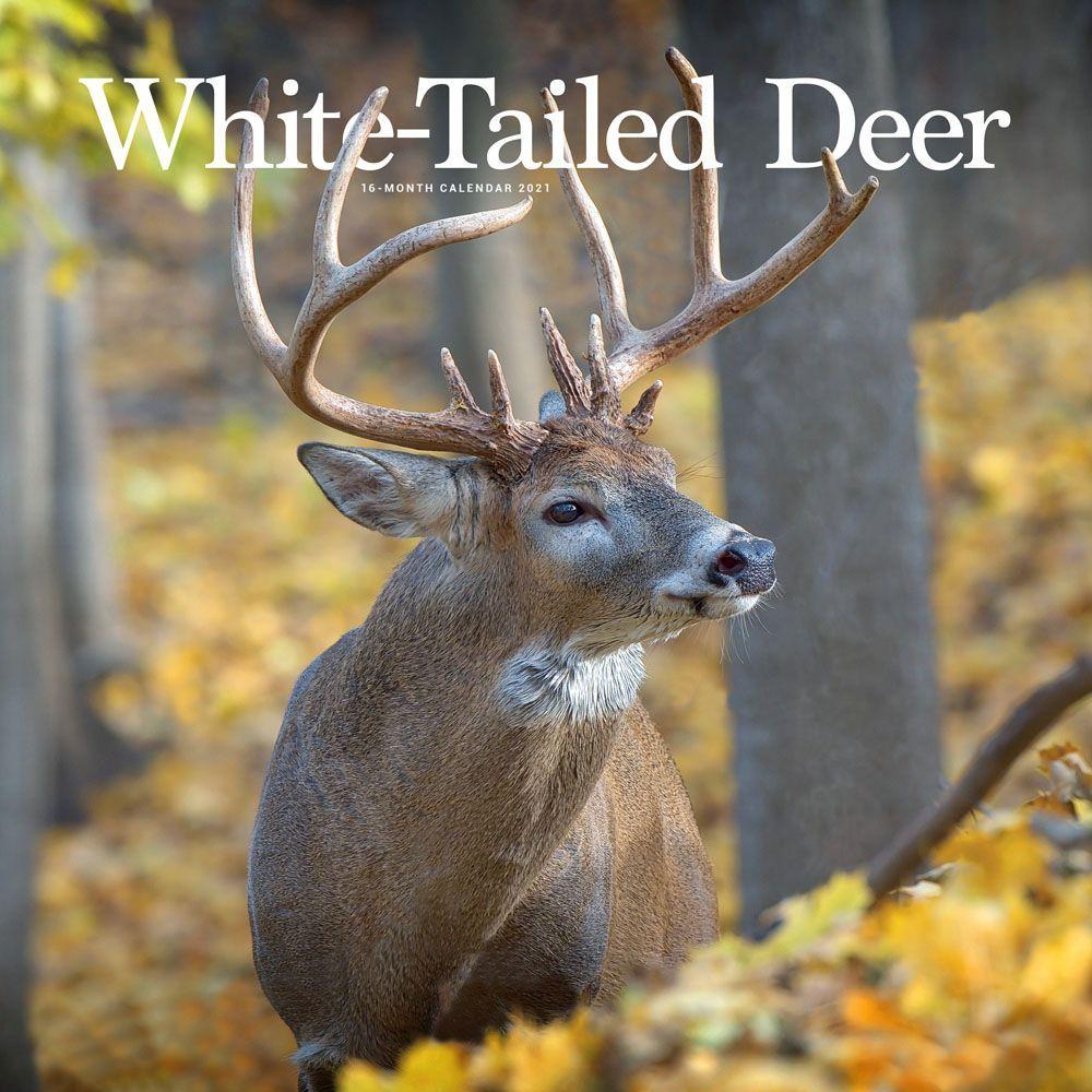 2021 White Tailed Deer Wall Calendar