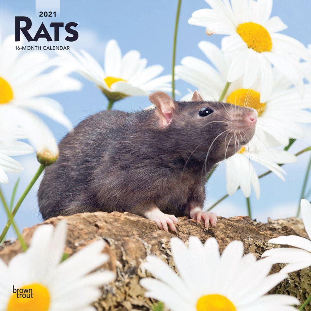 2021 Rats Wall Calendar