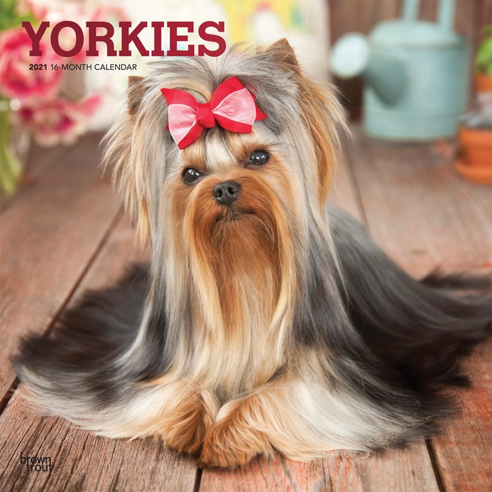 Yorkshire Terriers 2021 Wall Calendar