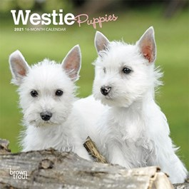 West Highland Terrier Puppies Mini Wall Calendar