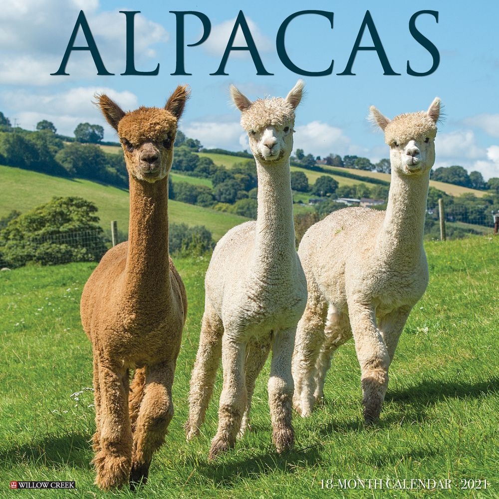 2021 Alpacas Wall Calendar