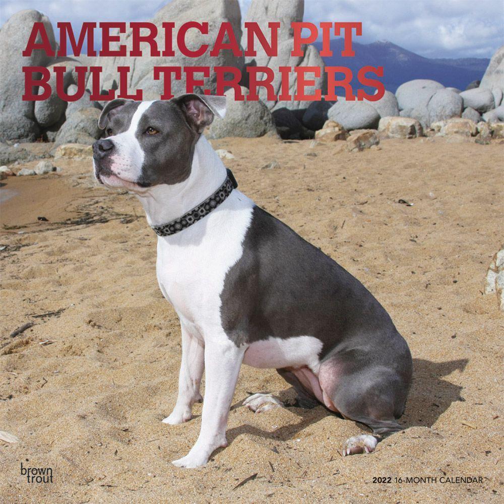 American Pit Bull Terriers 2022 Wall Calendar