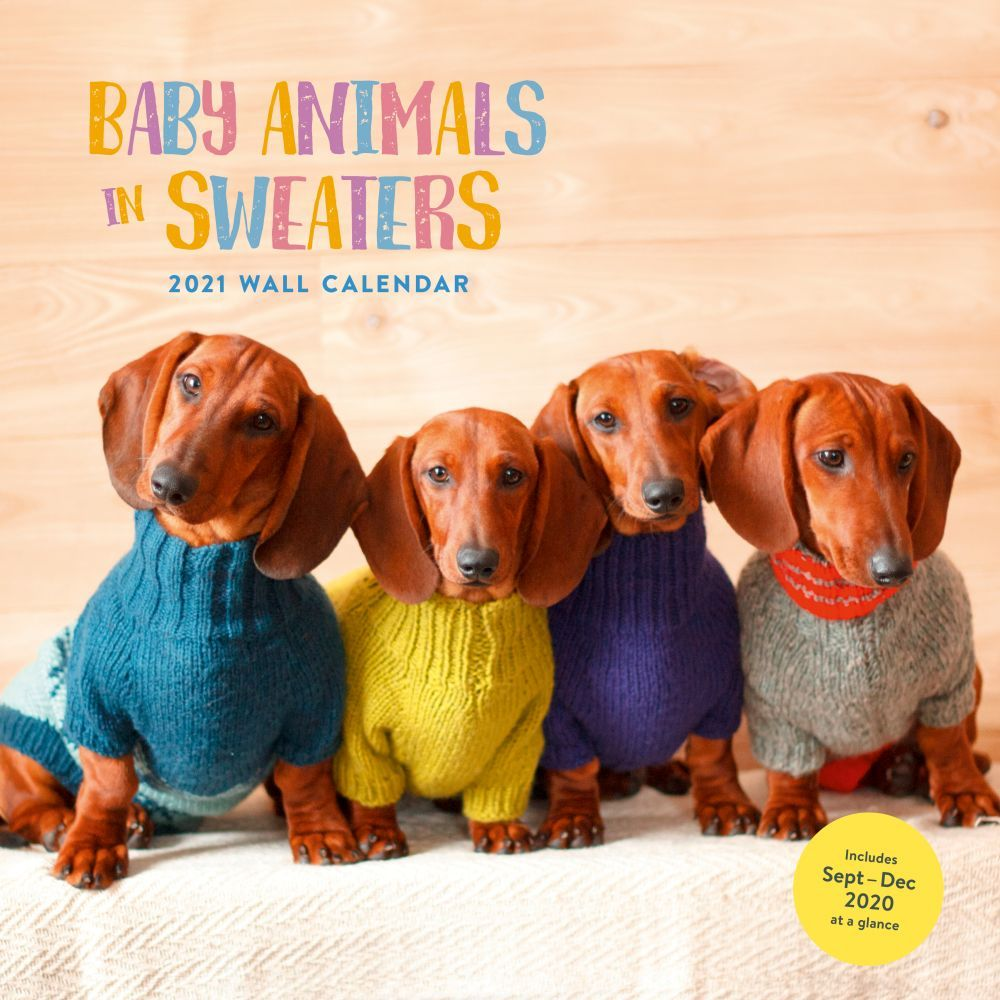2021 Baby Animals In Sweaters Wall Calendar