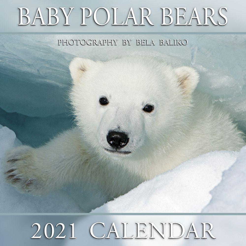 2021 Baby Polar Bears Mini Wall Calendar