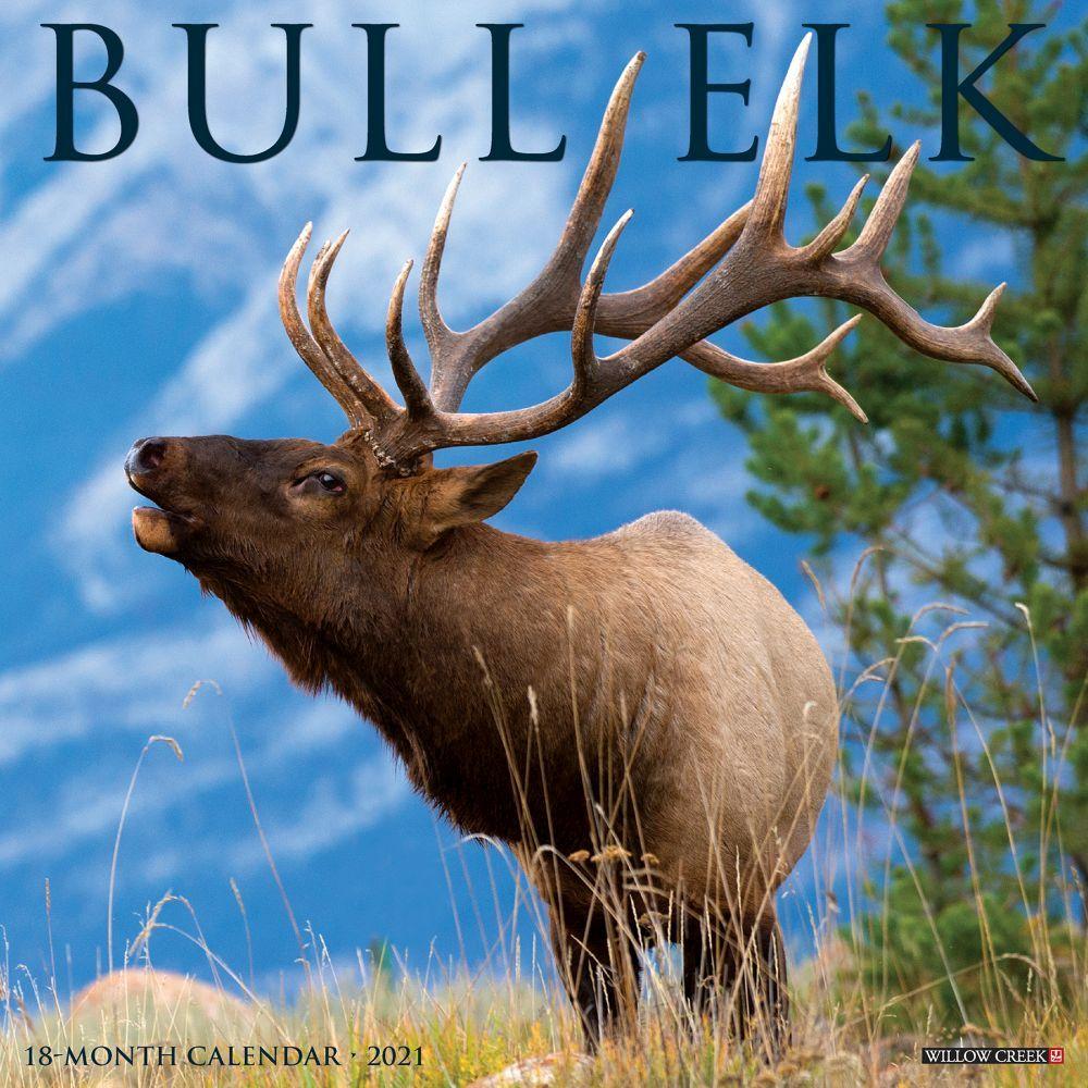 Bull Elk 2021 Wall Calendar