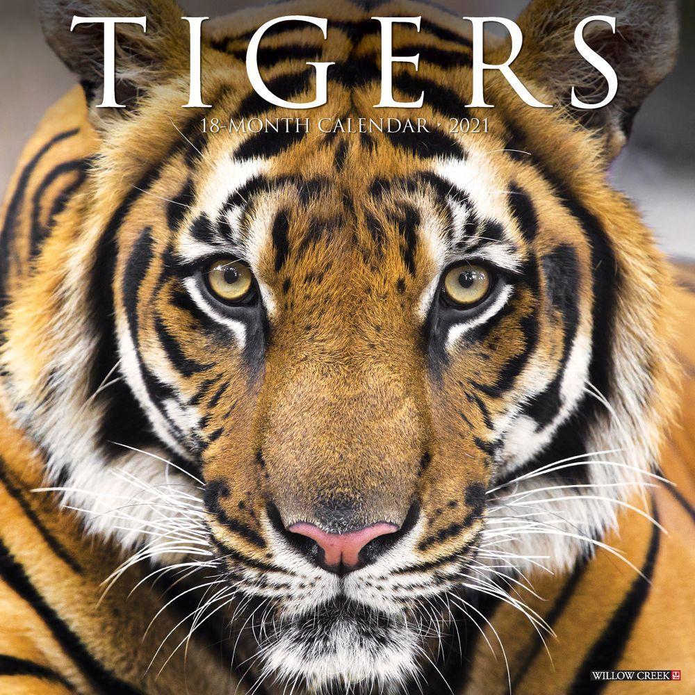 Tigers 2021 Wall Calendar