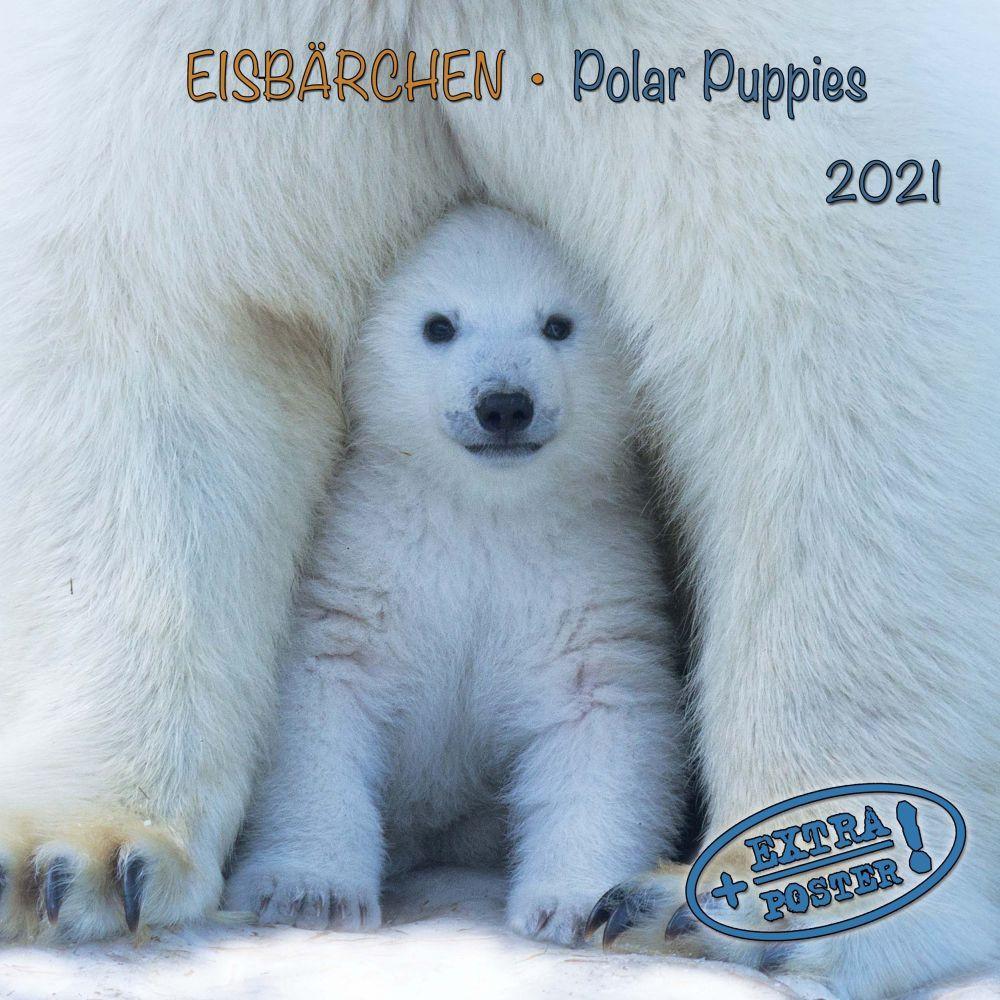 2021 Polar Bears Tushita Sm Wall Calendar