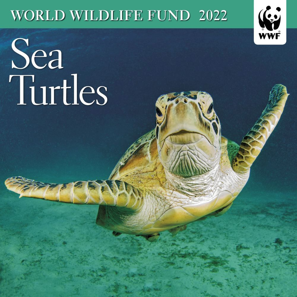 WWF Sea Turtles 2022 Mini Wall Calendar