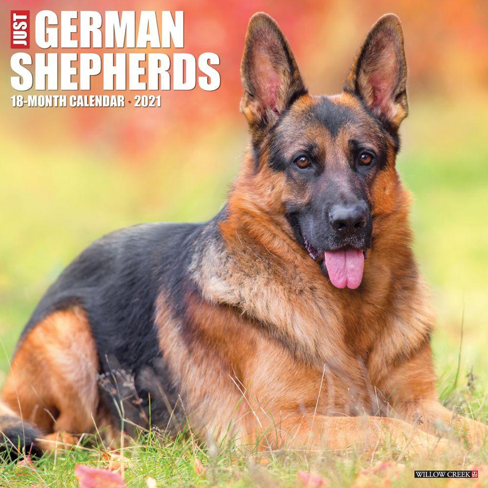 Just German Shepherds 2021 Wall Calendar