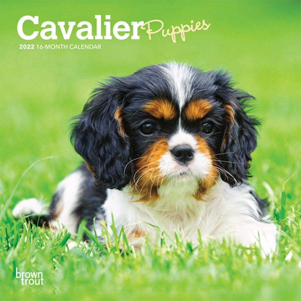 Cavalier King Charles Puppies 2022 Mini Wall Calendar