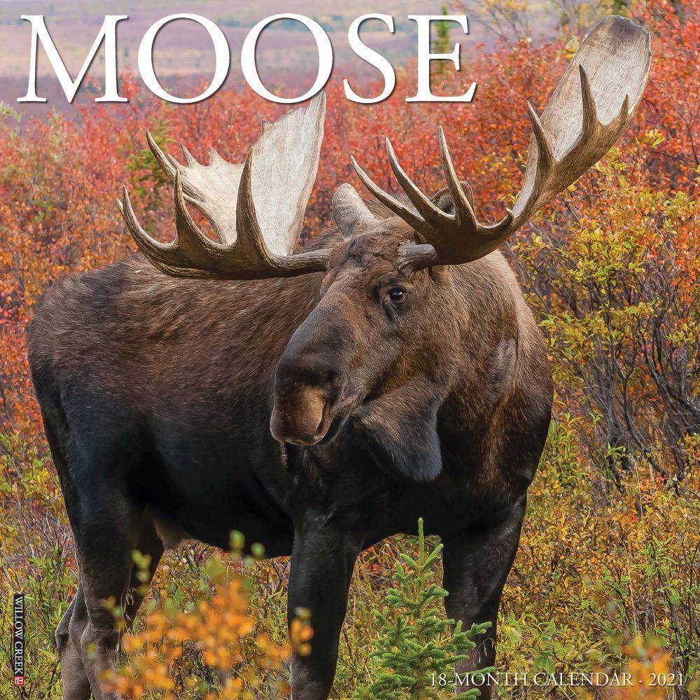 2021 Just Moose Wall Calendar