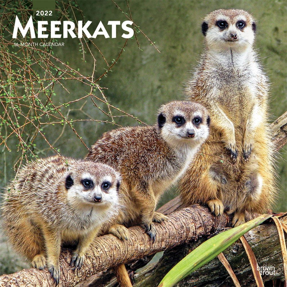 Meerkats 2022 Wall Calendar