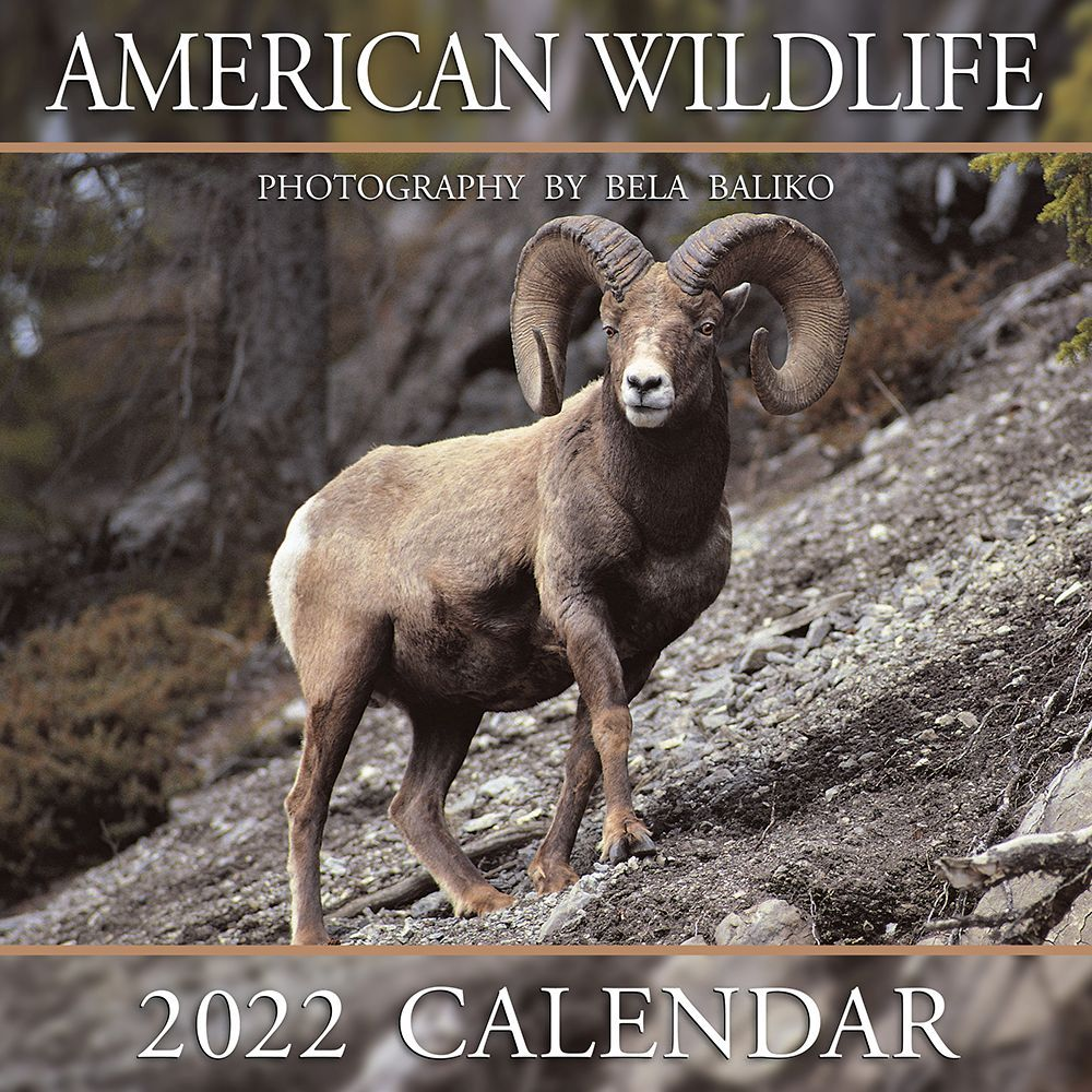 American Wildlife 2022 Wall Calendar