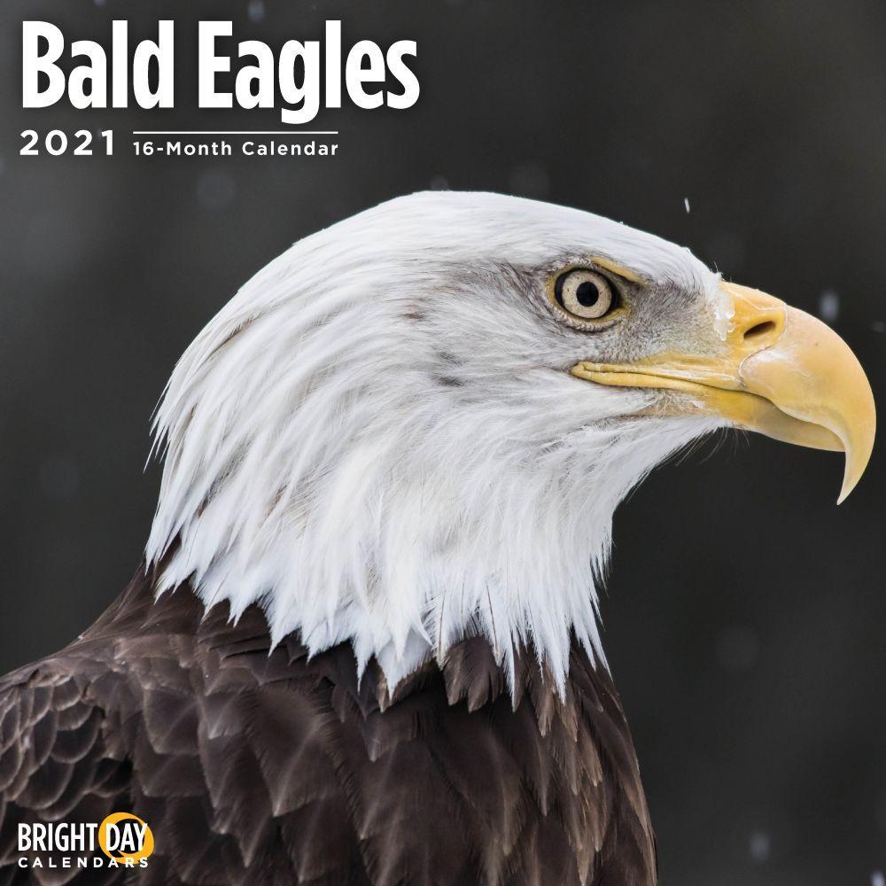 2021 Bald Eagles Wall Calendar