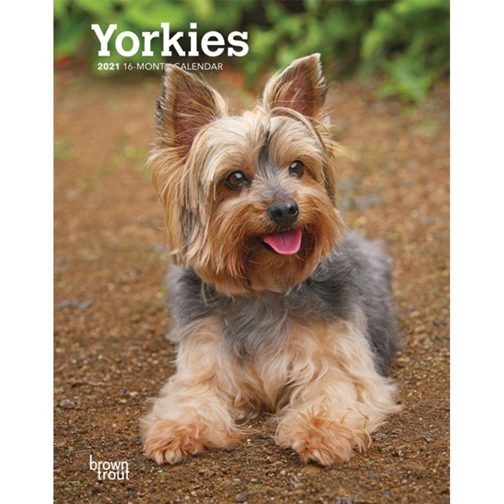 Yorkshire Terriers Planner Calendars Com