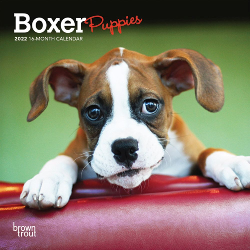 Boxer Puppies 2022 Mini Wall Calendar