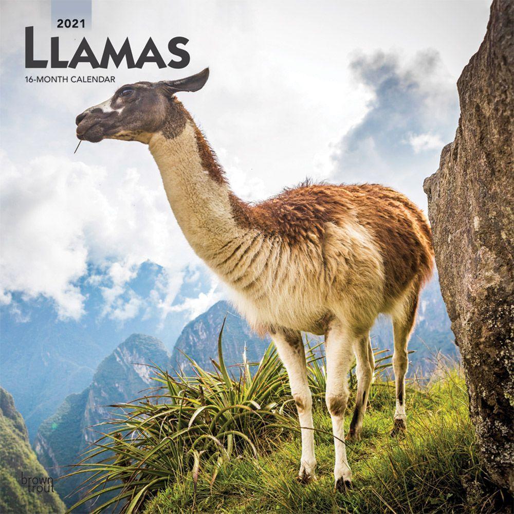 Llamas 2021 Wall Calendar