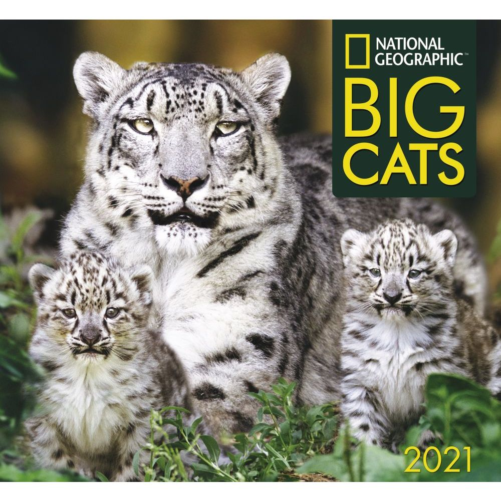 Big Cats National Geographic 2021 Wall Calendar