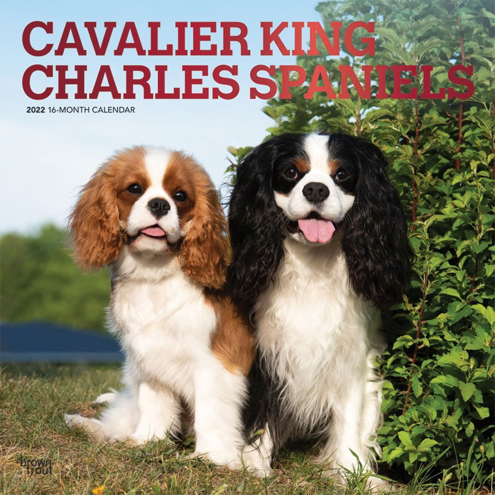 Cavalier King Charles 2022 Wall Calendar