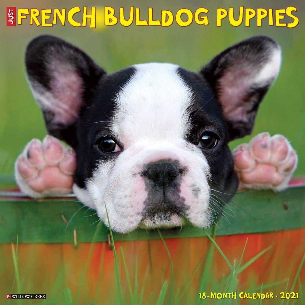 Just French Bulldog Puppies 2021 Wall Calendar