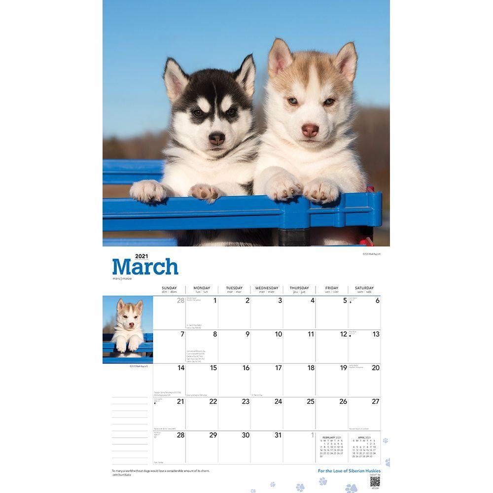 Siberian Huskies Deluxe Wall Calendar Calendars Com See more ideas about malamute, alaskan malamute, dogs. siberian huskies deluxe wall calendar