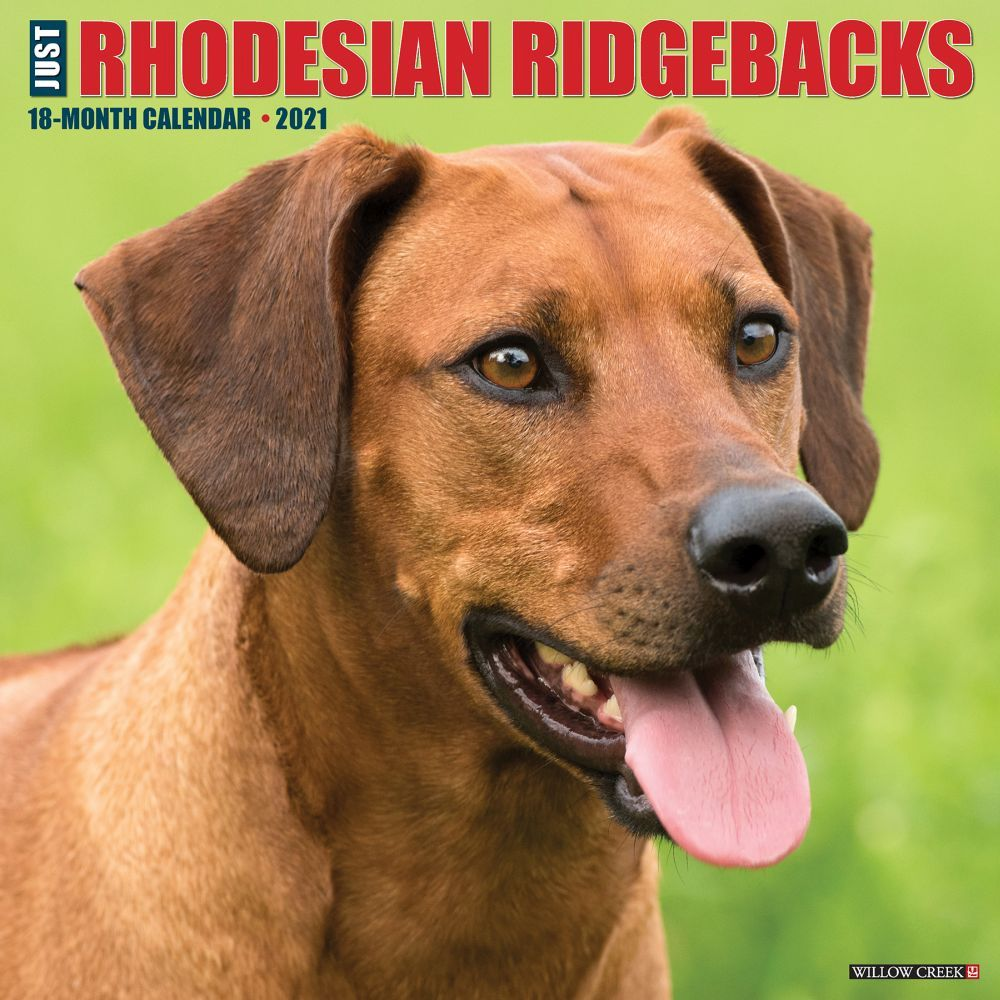 Just Rhodesian Ridgebacks 2021 Wall Calendar