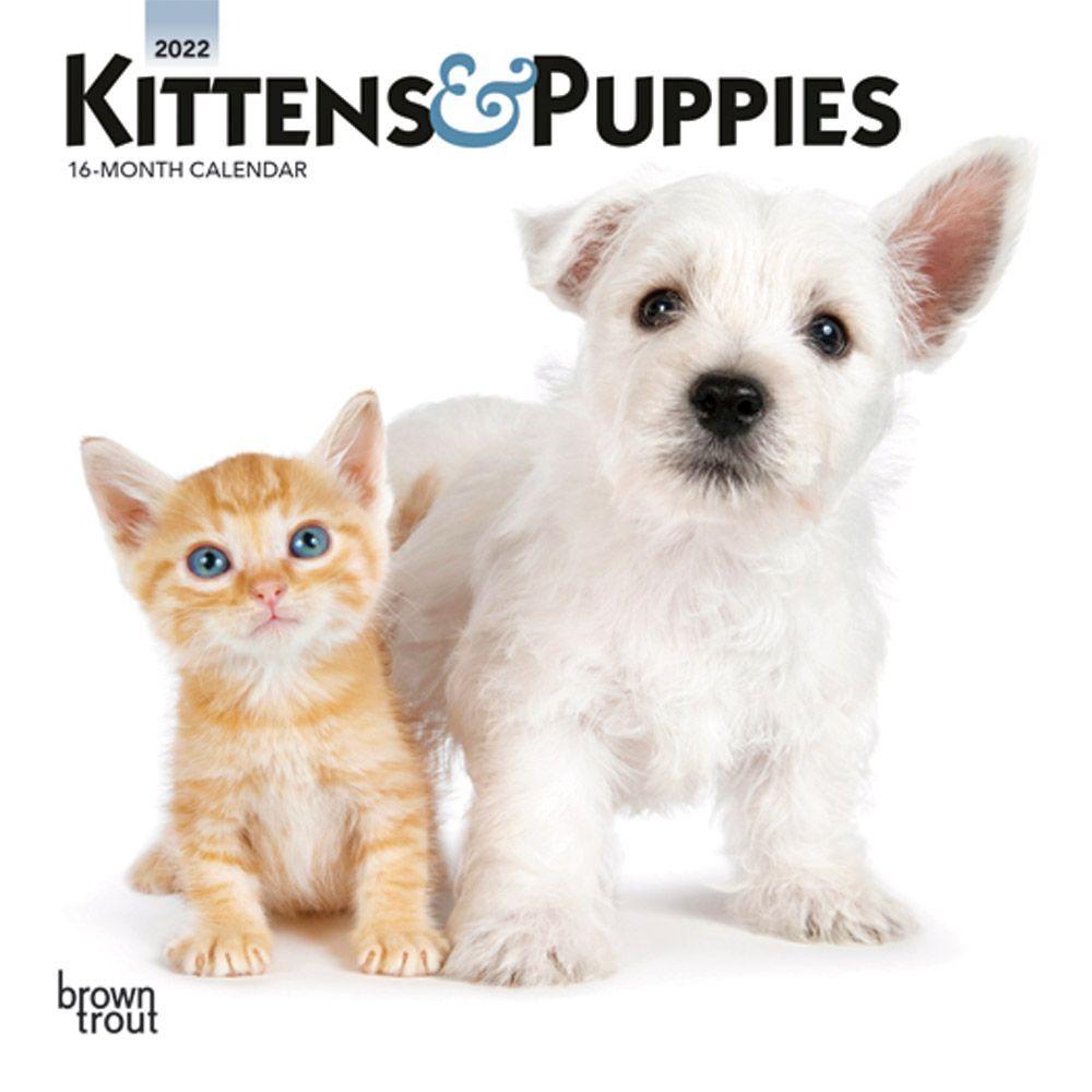 Kittens & Puppies 2022 Mini Wall Calendar
