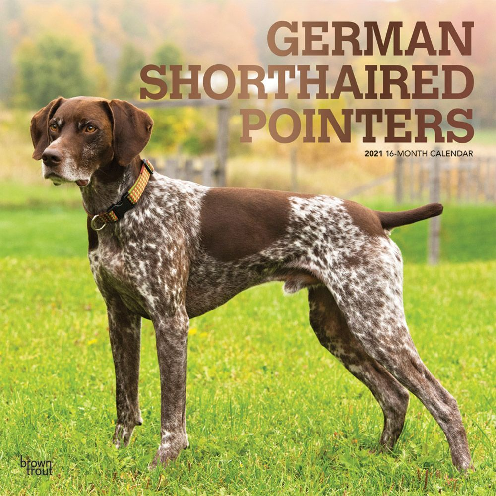 German Shorthaired Pointers 2021 Wall Calendar