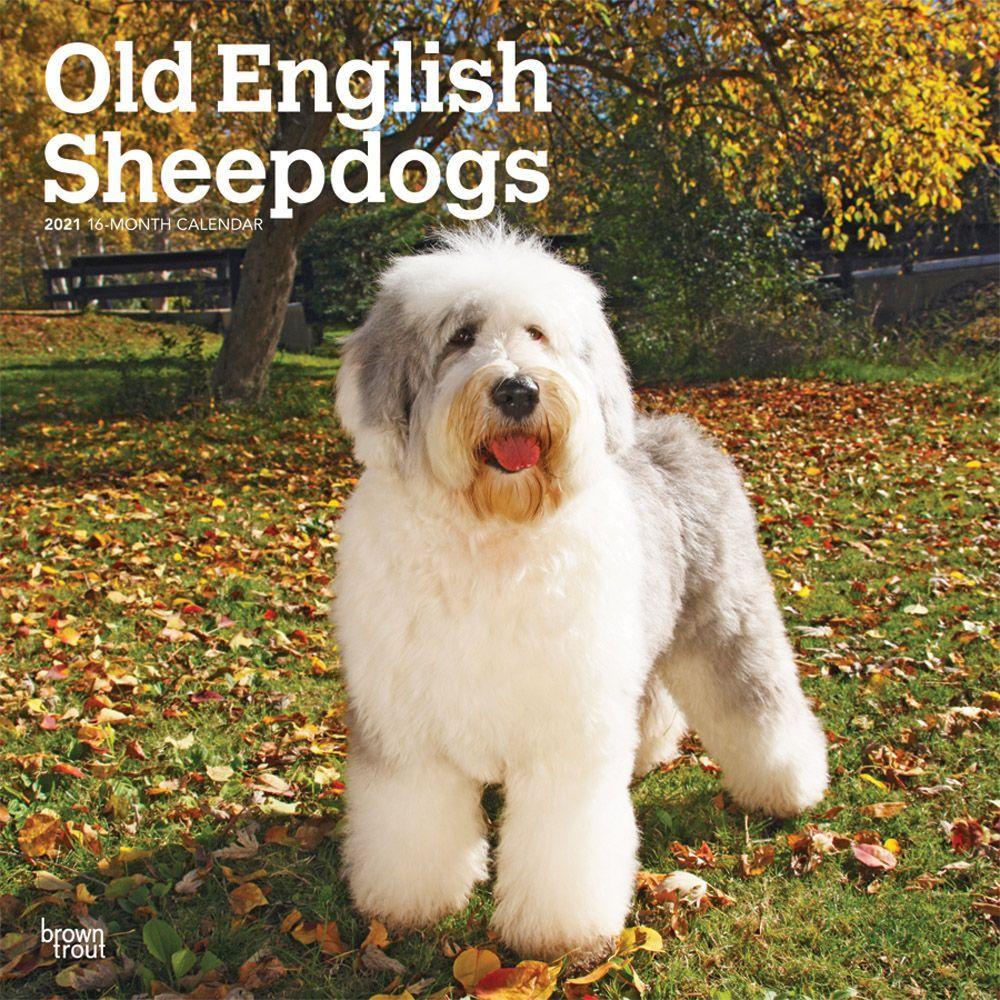 Old English Sheepdogs 2021 Wall Calendar