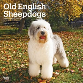 Old English Sheepdogs Wall Calendar